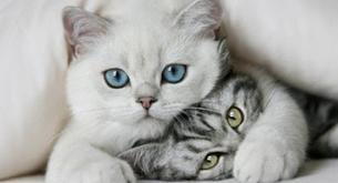 El gato domestico es el nemigo numero uno  de la fauna salvaje en Estados Unidos